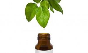 home-remedies-for-dandruff-tea-tree-oil
